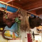 В филиале Эвенкийского краеведческого музея в Ванаваре экспонаты не лежат за стеклом, здесь можно всё потрогать и покрутить в руках.