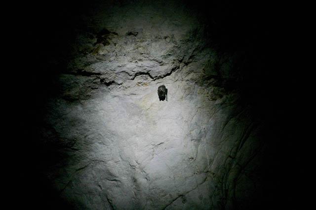 Летучие мыши — единственные пещерные жители с постоянной пропиской. Фотографировать их со вспышкой нельзя, но можно снять, слегка подсветив фонариком