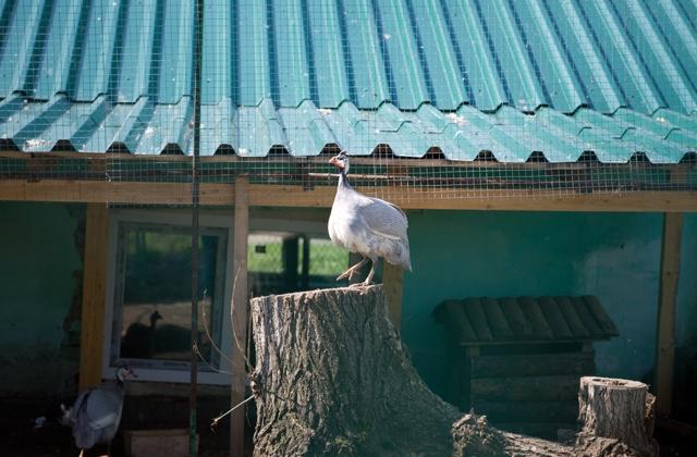Зоопарк Большеречье