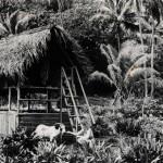 В 1936 году Тур Хейердал с женой Лив Кушерон-Торп целый год жили в отрыве от цивилизации на острове Фату-Хива (один из группы Маркизских островов). Об этом исследователь в 1938 году написал книгу «В поисках рая», позже появился её расширенный вариант — книга «Фату-Хива».