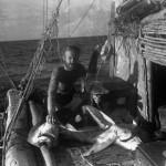 7.Участники экспедиции «Кон-Тики» питались в основном консервами, но часто и ловили рыбу, в том числе акул. «В пути нам предстояло узнать, можно ли ловить в открытом море рыбу и собирать дождевую воду. Я считал, что мы должны были взять с собой тот фронтовой паёк, который нам выдавался во время войны», — вспоминал антрополог.