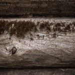 Посёлок геологов Нежил (7)